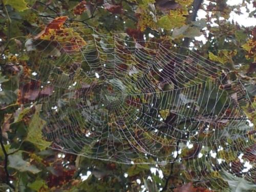 Nice Web