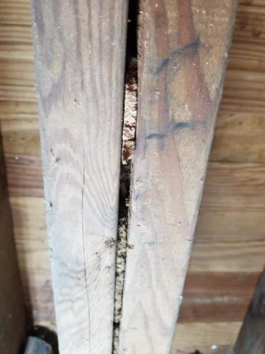 Termite Frass Between Double Joists