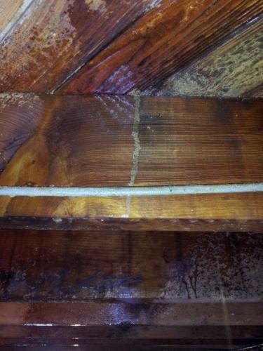 Termite Shelter Tube