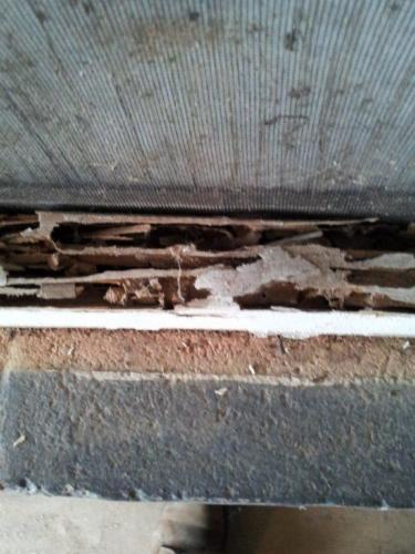 Termite  Carpenter Ant Evidence